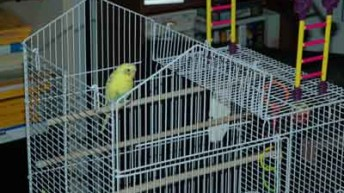 Parakeet Bird Cages and Parakeet Toys