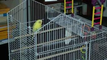 Parakeet Bird Cages and Parakeet Toys