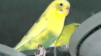 Parakeet Dander Allergies